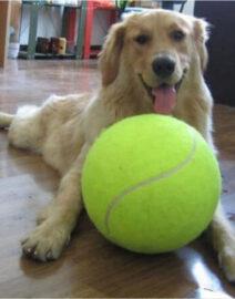Pelota tenis2